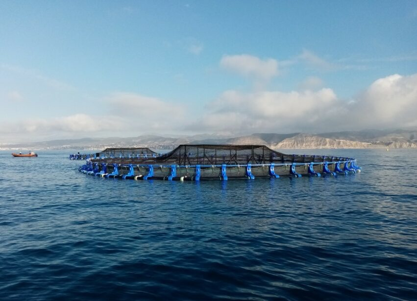 AVRAMAR launches its marine farm in El Campello